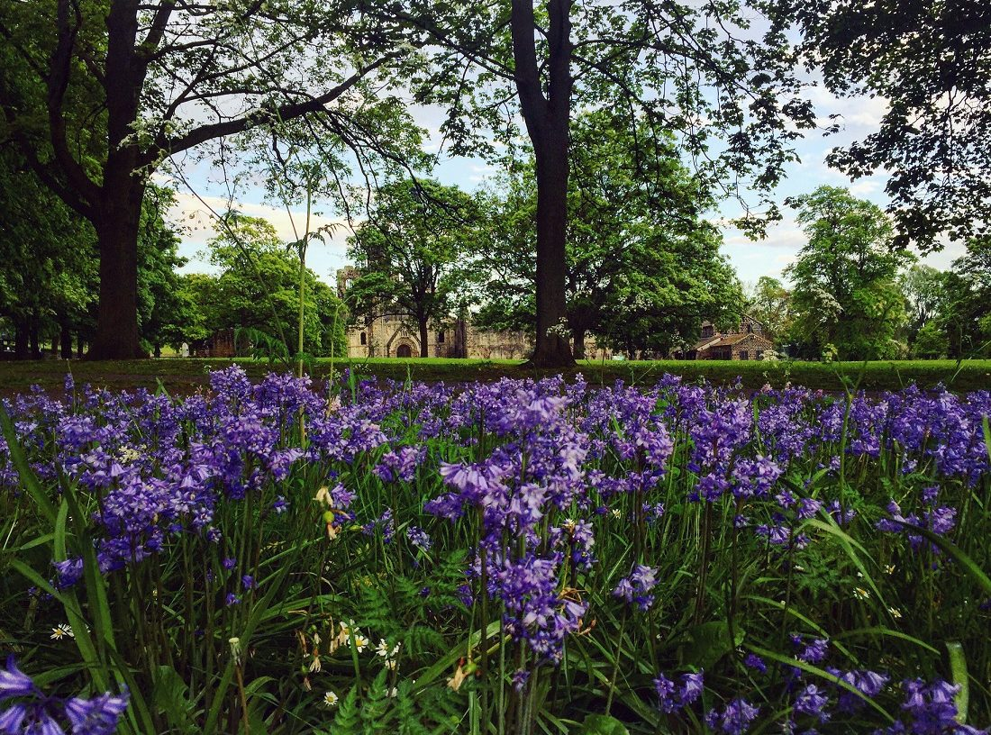 This week in Leeds - Kirkstall Abbey